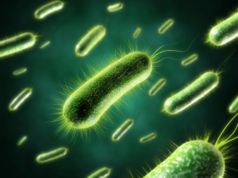 анаэробные бактерии и запах изо рта